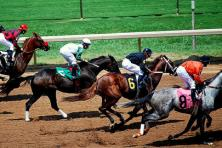 Top 5 Australian Horse Races